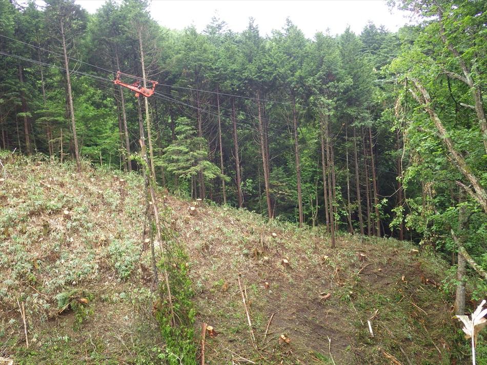 林業作業4