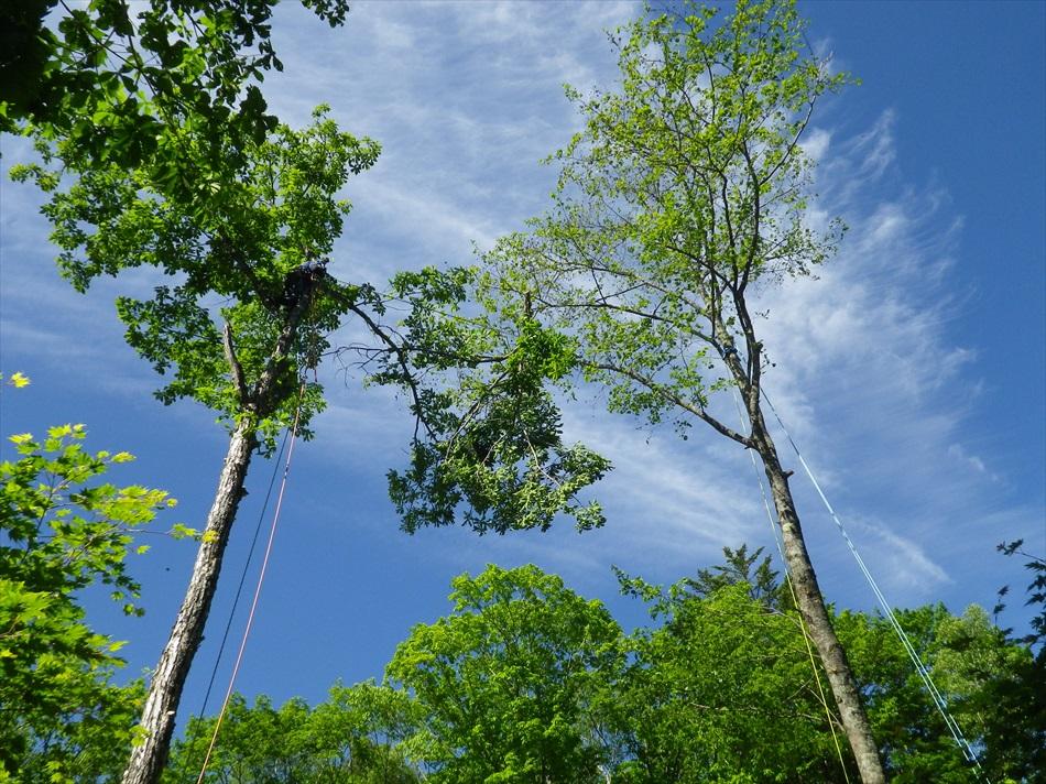 林業作業8
