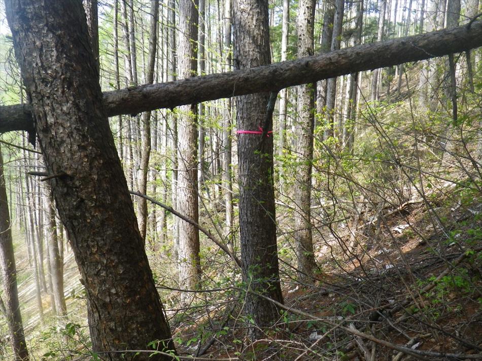 林業作業1