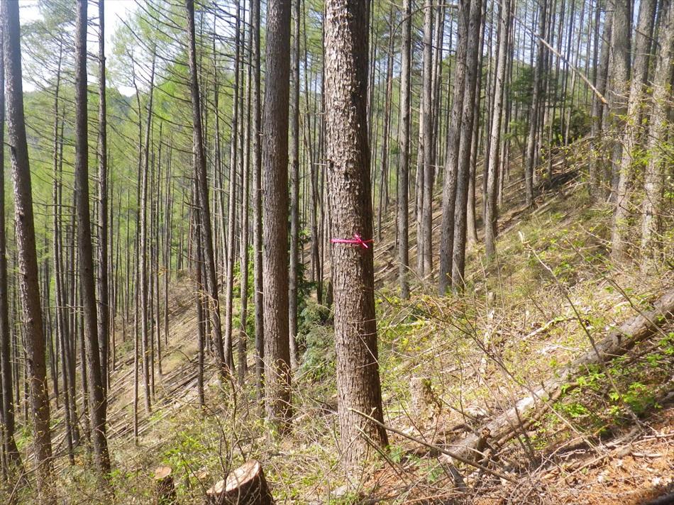 林業作業3