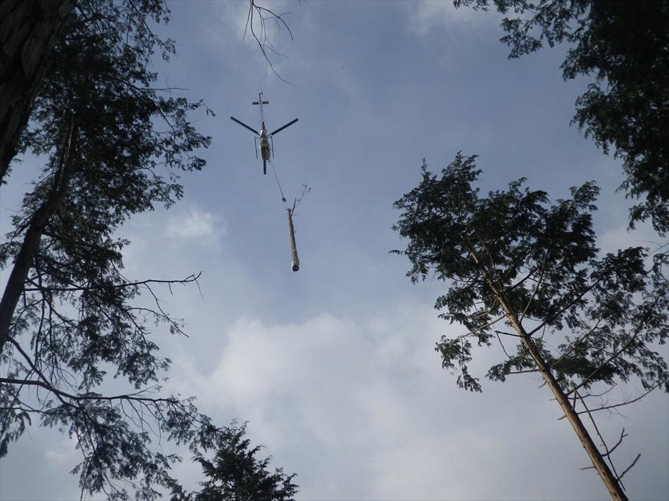 林業作業6