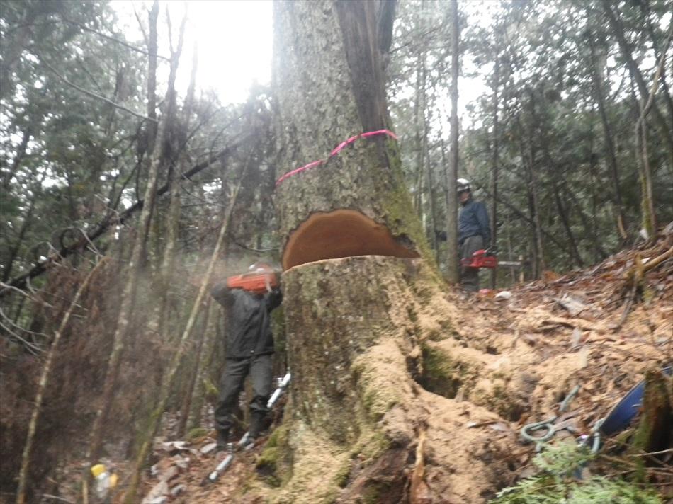 林業作業7